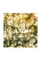 Golden ferns, Mortimer, Berkshire, United Kingdom