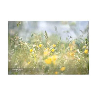 Meadow, Hampshire
